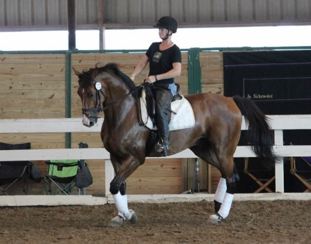 Beginner Advanced Dressage Lessons a