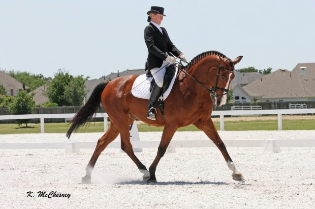 Beginner Advanced Dressage Lessons b